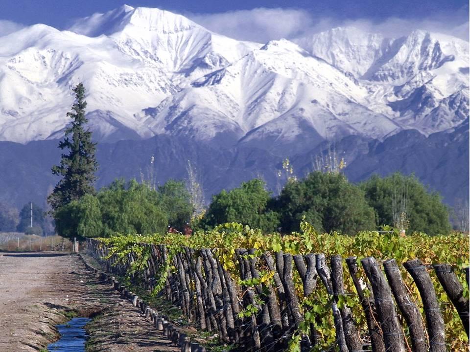 Concha-y-toro-vineyard-Santiago-Chile.JPG